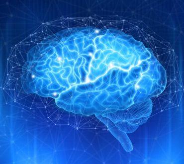 Επιστήμονες ανακάλυψαν ότι ο εγκέφαλος έχει τον δικό του τρόπο να ρυθμίζει την αρτηριακή πίεση