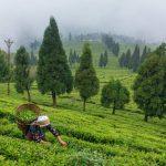 Πoλιτεία στην Ινδία απαγόρευσε τη χρήση φυτοφαρμάκων και μεταμορφώθηκε σε παράδεισο