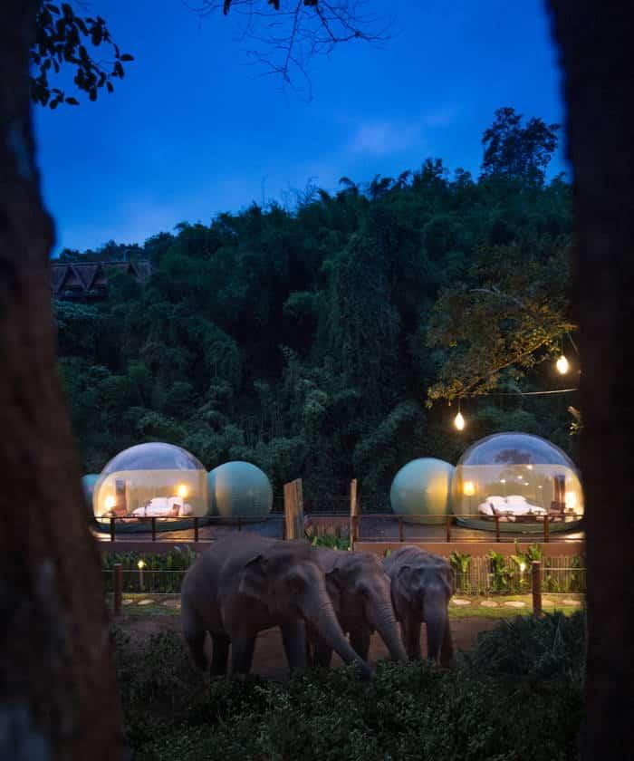 Στην Ταϊλάνδη οι επισκέπτες μπορούν να κοιμηθούν σε γυάλινα δωμάτια δίπλα σε ελέφαντες (Φωτογραφίες)