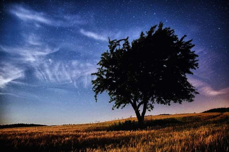 5 μαθήματα ζωής που μπορούμε να διδαχθούμε από τα δέντρα