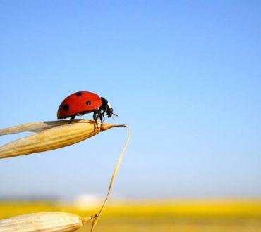 Ο άνθρωπος εξαρτάται από το μέλλον των εντόμων, προειδοποιούν οι επιστήμονες