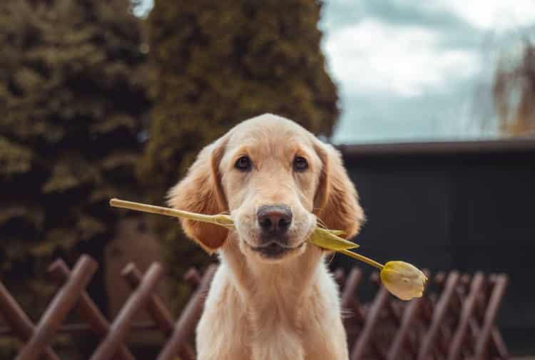 Εκπαιδευμένος σκύλος προστατεύει την ιδιοκτήτριά του κατά τη διάρκεια κρίσης πανικού (Βίντεο)