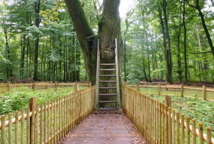 Γερμανία: Το αιωνόβιο δέντρο που βοηθά τους κατοίκους να βρουν την αληθινή αγάπη
