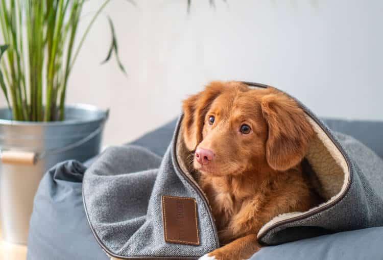 Ένας στους τρεις σκύλους έχει άγχος και φοβίες, σύμφωνα με έρευνα