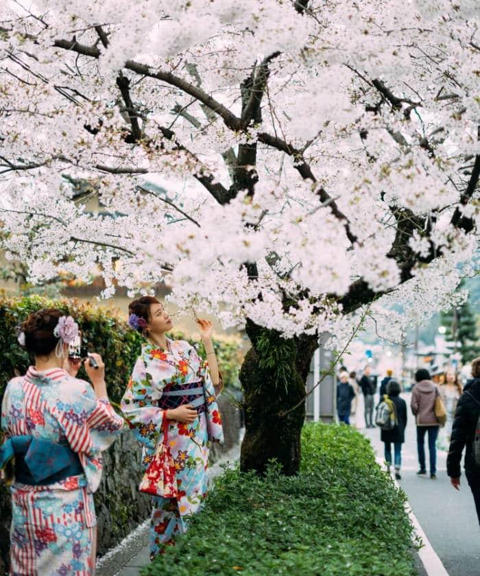 Hanami: Οι Ιάπωνες θαυμάζουν τις ανθισμένες κερασιές και καλωσορίζουν την άνοιξη