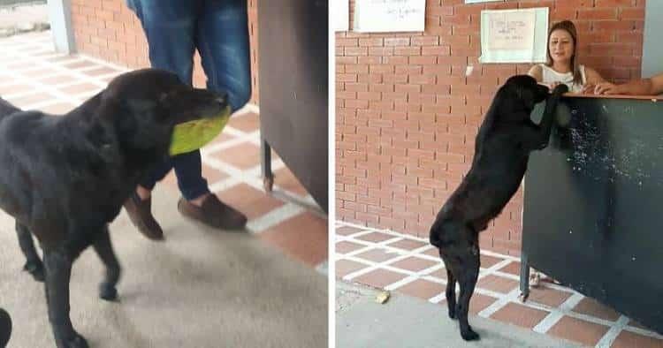 Σκύλος αγοράζει κάθε μέρα μπισκότα πληρώνοντας με φύλλα δέντρου (Φωτογραφίες)
