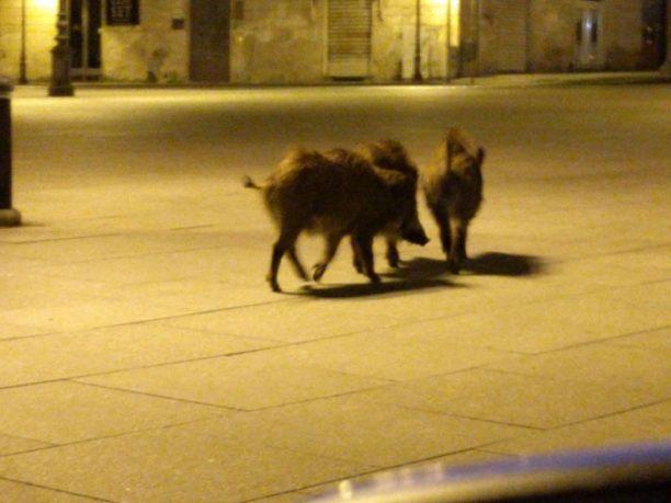 الحيوانات المدن الصحراوية كحجر للسكان zwa-eisvaloun-erimes