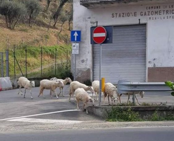 Ζώα «εισβάλλουν» σε έρημες πόλεις καθώς οι κάτοικοι βρίσκονται σε καραντίνα (Φωτογραφίες)
