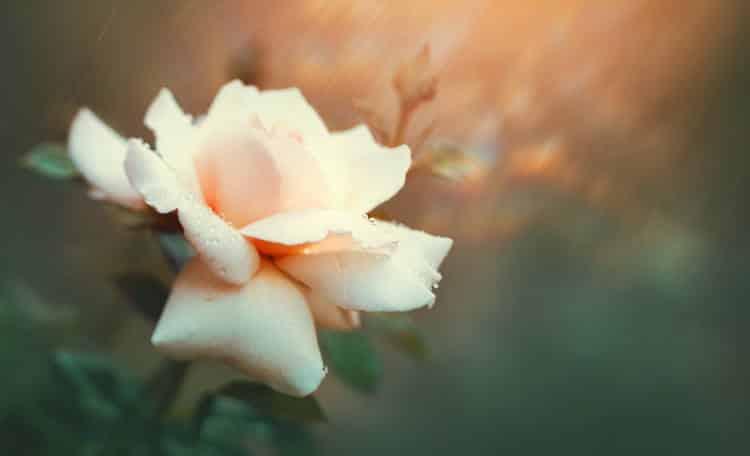 Οδυσσέας Ελύτης: «Την Άνοιξη αν δεν την βρεις, την φτιάχνεις»
