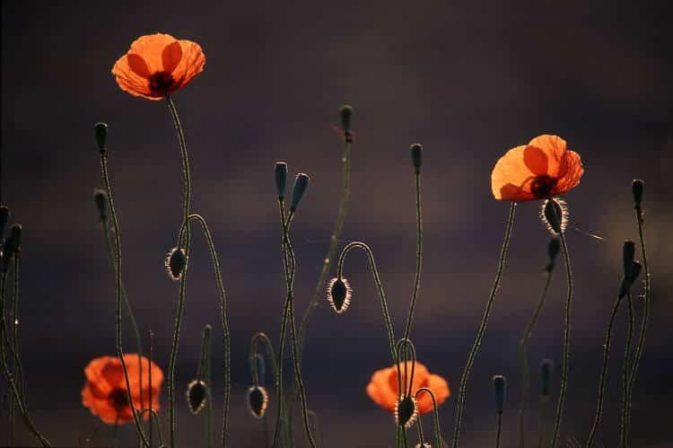 «Γιατί η ποίηση αρχίζει από κει που την τελευταία λέξη δεν την έχει ο θάνατος» | Οδυσσέας Ελύτης