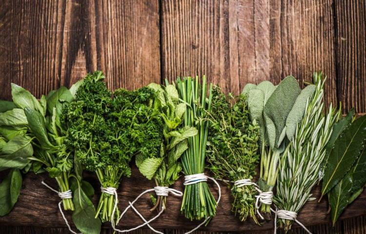 Τα βότανα που βοηθούν στην καταπολέμηση των ιών και ενισχύουν το ανοσοποιητικό μας σύστημα