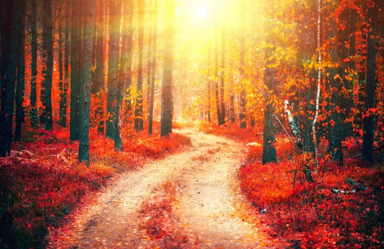 Οι επιλογές δημιουργούν τις διαδρομές μας και οι διαδρομές μας είναι οι επιλογές μας