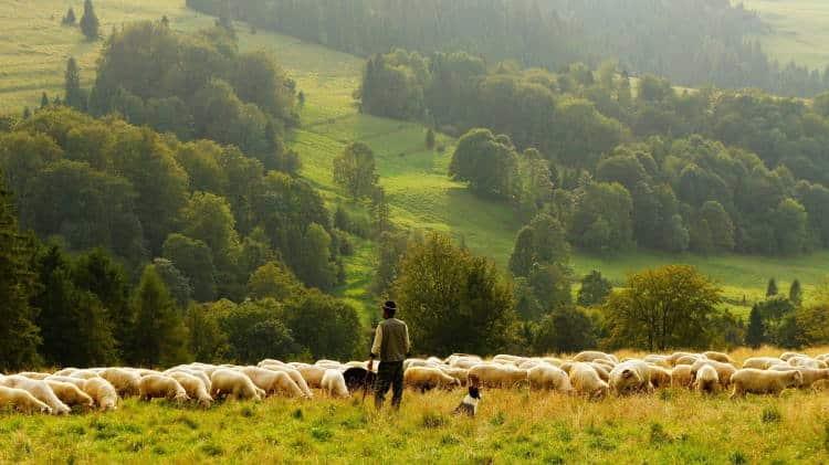 Λέον Μάρσαλ: Επιτακτική ανάγκη η εκτροφή ζώων χωρίς αντιβιοτικά (Βίντεο)