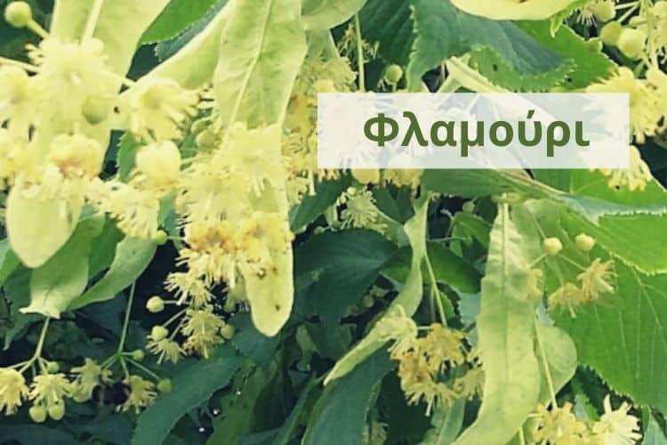 Φλαμούρι: Πως φτιάχνεται, τι παρενέργειες έχει και γιατί κάνει εξαιρετικό μέλι
