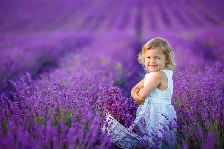 Λεβάντα η αρωματική: Ιδιότητες, φροντίδα, καλλιέργεια