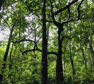 Βέλγιο, Ολλανδία και Γαλλία δημιουργούν δάση με τη μέθοδο «Miyawaki»