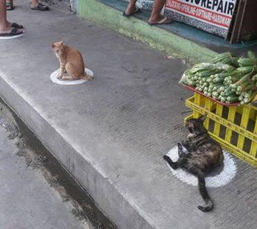 "Viral: Γάτες στις Φιλιππίνες δίνουν... μαθήματα ""κοινωνικής αποστασιοποίησης"" τηρώντας τα μέτρα για τις αποστάσεις!"