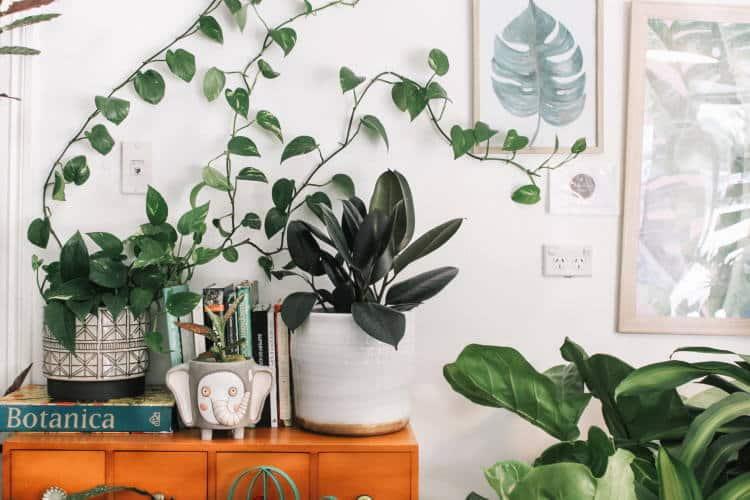 5 λόγοι που τα φύλλα των φυτών κιτρινίζουν και τι να κάνουμε για να ζωντανέψουν