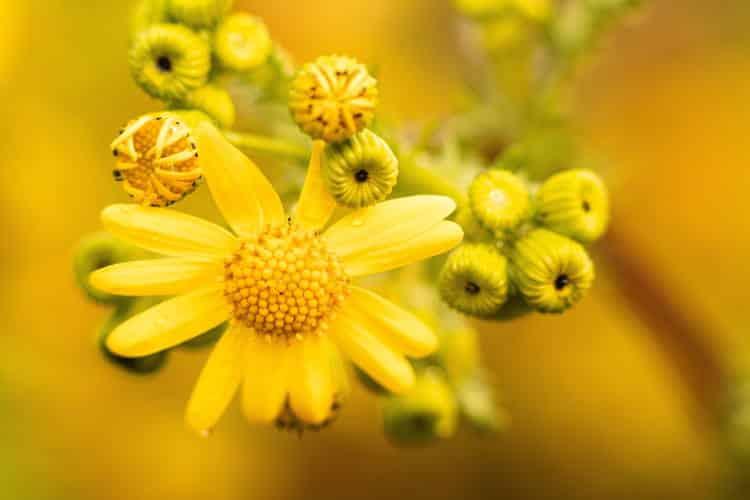 6 αρωματικά φυτά και βότανα που απωθούν τις μύγες