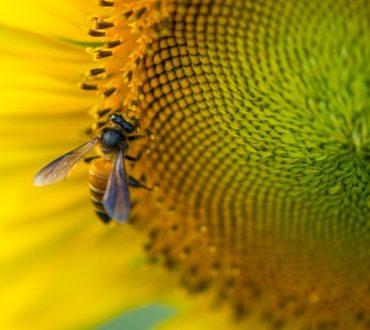 7 απλοί τρόποι να βοηθήσουμε τις μέλισσες να επιβιώσουν