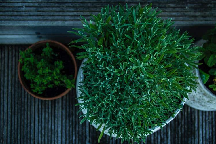 Πώς να καλλιεργήσουμε στο σπίτι τα δικά μας λαχανικά: Tips για να ξεκινήσουμε