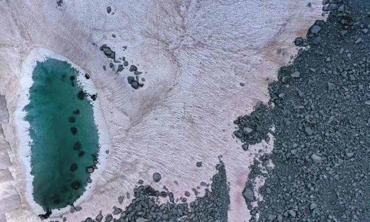 Ροζ χιόνι στις ιταλικές Άλπεις ίσως συνδέεται με τις επιπτώσεις της κλιματικής αλλαγής