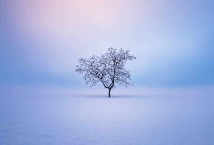 Εντυπωσιακές φωτογραφίες δείχνουν την γαλήνια ομορφιά των μοναχικών δέντρων στη Φινλανδία