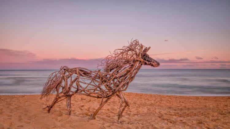 Καλλιτέχνης δημιουργεί γλυπτά ζώων σε παραλία της Αυστραλίας από ξύλα που έχει ξεβράσει η θάλασσα (Φωτογραφίες)