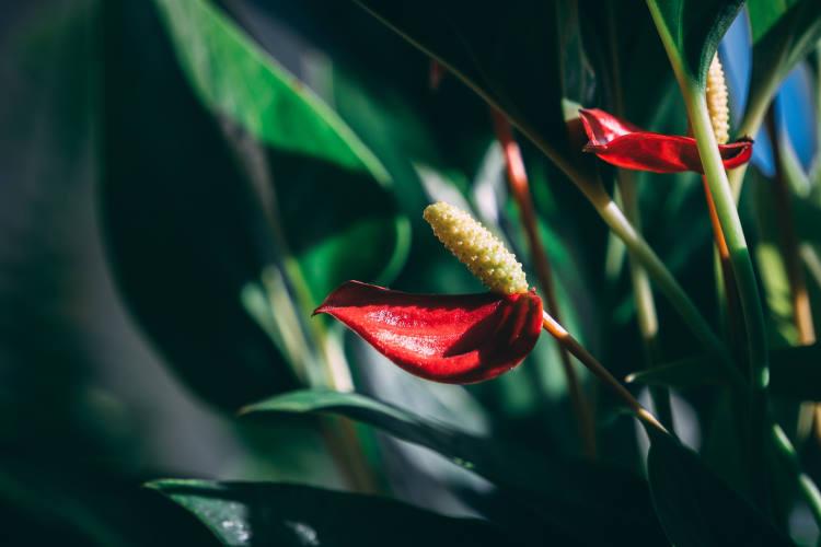 5 φυτά εσωτερικού χώρου που καθαρίζουν τον αέρα και είναι κατάλληλα για το υπνοδωμάτιο