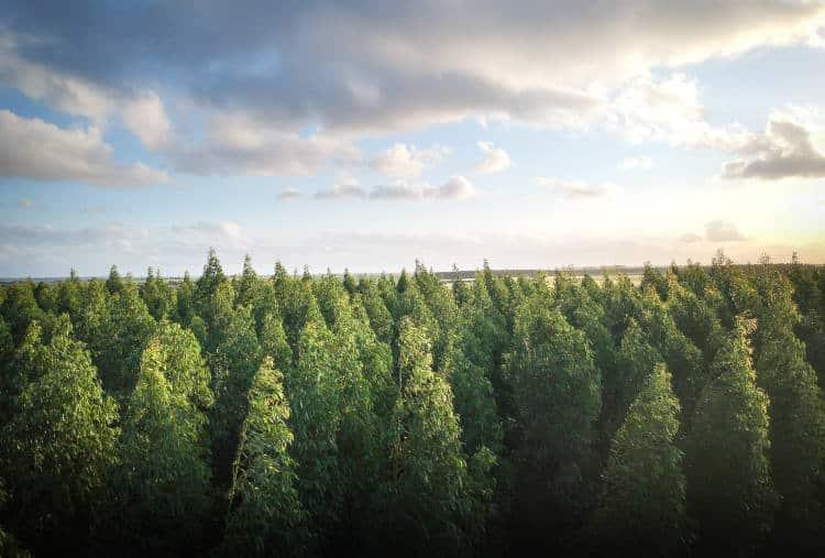 Καλιφόρνια: Εργαλείο χαρτογραφεί κάθε δέντρο στα δάση για να μειωθούν οι καταστροφικές πυρκαγιές