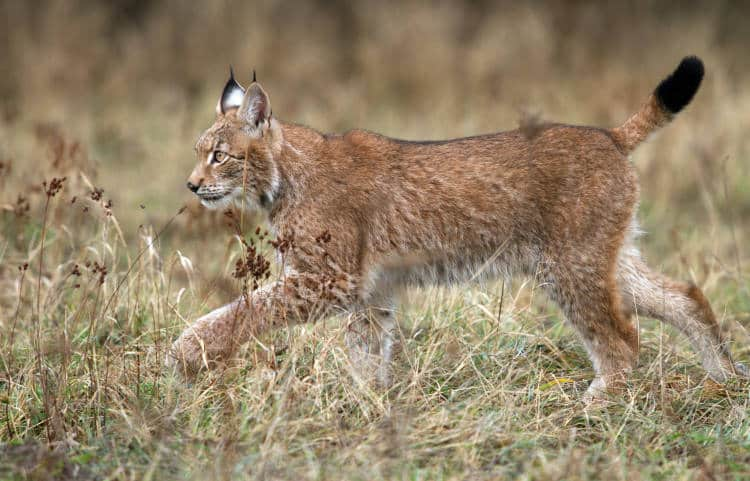 Δεκάδες είδη ζώων σώθηκαν από βέβαιη εξαφάνιση χάρη στις προσπάθειες των οργανισμών προστασίας