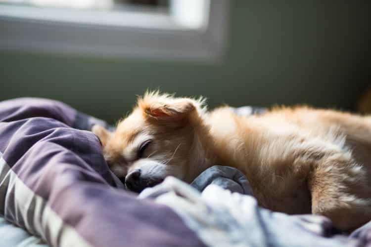 Οι σκύλοι ονειρεύονται τους ανθρώπους που αγαπούν, σύμφωνα με ψυχολόγο