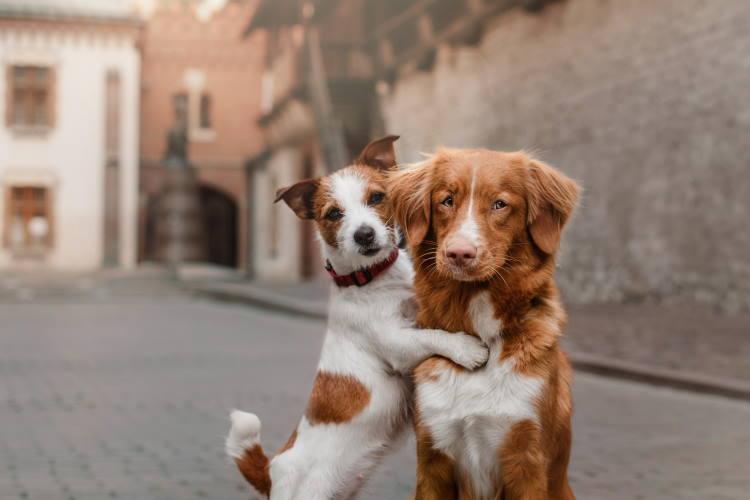 Παγκόσμια Ημέρα των Ζώων: Φερόμαστε με σεβασμό και υπευθυνότητα σε όλα τα είδη