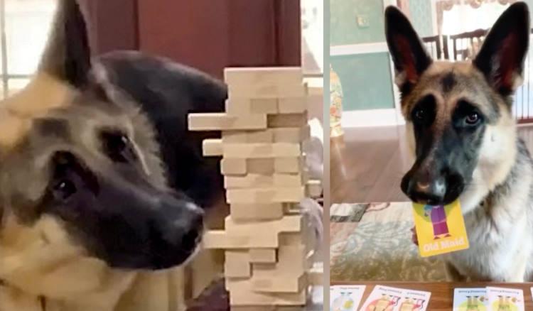 Σκυλίτσα έμαθε να παίζει επιτραπέζια με τους ιδιοκτήτες της κατά τη διάρκεια της καραντίνας (Βίντεο)