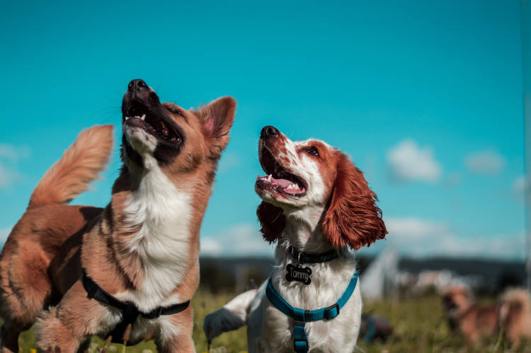 Οι σκύλοι είναι οι παλιότεροι φίλοι του ανθρώπου, σύμφωνα με αναλύσεις DNA