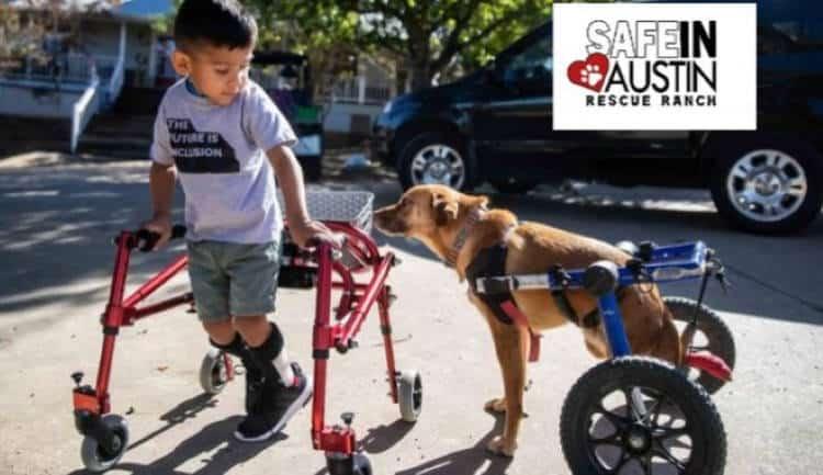 Τέξας: Παιδιά και ζώα με ειδικές ανάγκες βιώνουν μαζί την προσπάθεια αποκατάστασης