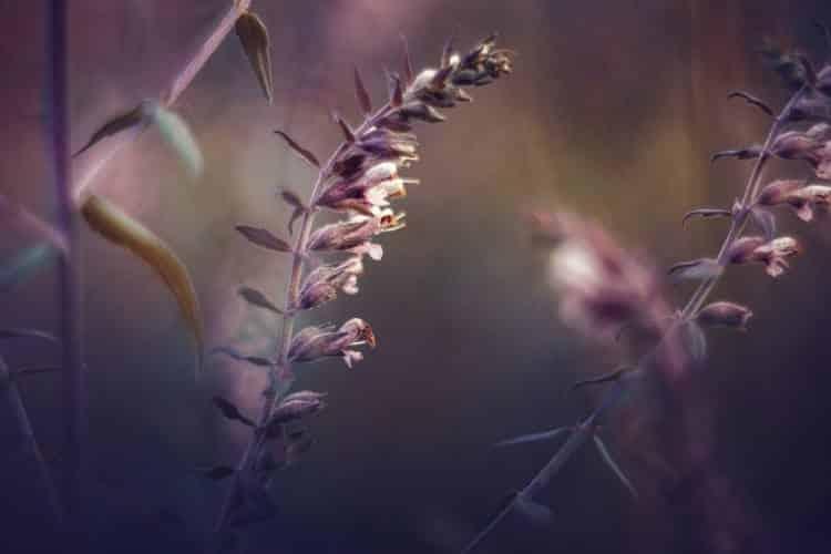 Το αγκάθι… το τραύμα της ψυχής
