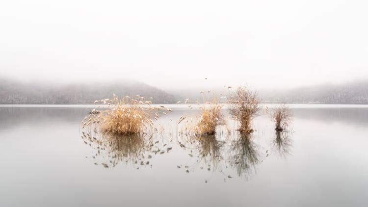 Η δημιουργικότητα είναι σαν μια λίμνη με ψάρια. Αν δεν την φροντίζεις, κάποια μέρα θα γίνει βάλτος