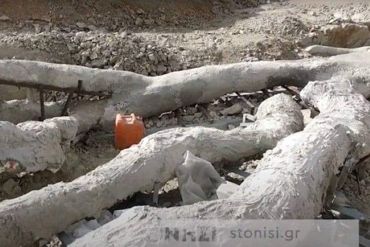 Λέσβος: Ανακαλύφθηκε εκπληκτικό απολιθωμένο δέντρο ηλικίας περίπου 20 εκατομμυρίων ετών