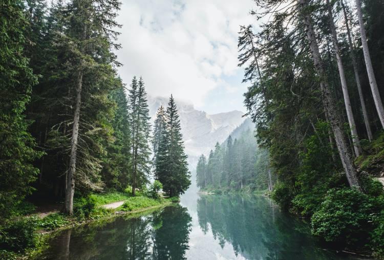 8 εκπληκτικά στοιχεία για τα δάση που ίσως δεν γνωρίζατε