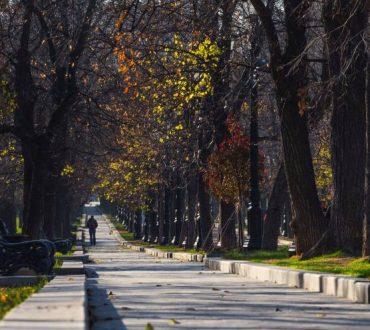 Έρευνα: Όσο περισσότερα δέντρα έχει μια γειτονιά, τόσο λιγότερα αντικαταθλιπτικά λαμβάνουν οι κάτοικοί της