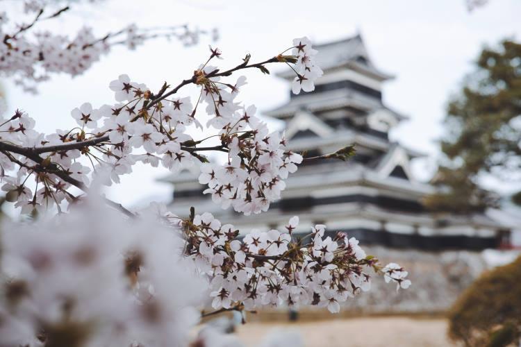 Η Ιαπωνία προσφέρει ψηφιακές περιηγήσεις σε όσους επιθυμούσαν να την επισκεφτούν