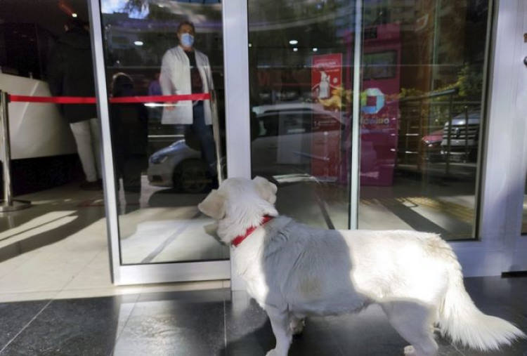 Σκυλίτσα περίμενε υπομονετικά τον ιδιοκτήτη της επί πέντε μέρες έξω από το νοσοκομείο