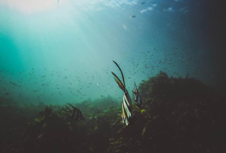 Θα μπορούσε η θεραπεία για τον Covid-19 να βρίσκεται στο βυθό της θάλασσας;