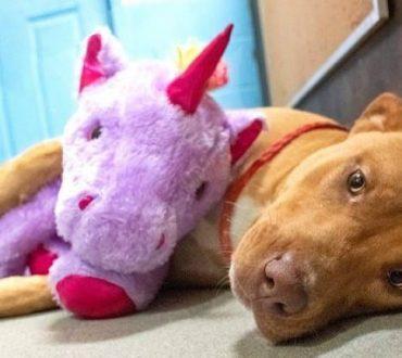 Αδέσποτος σκύλος έκλεψε 5 φορές λούτρινο μονόκερο από κατάστημα και τελικά υιοθετήθηκε
