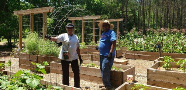 Ατλάντα: Το πρώτο δάσος με δωρεάν φρούτα και λαχανικά καταπολεμά τη διατροφική ανασφάλεια