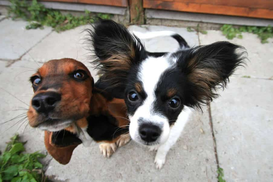 Σε αυτούς τους αβέβαιους καιρούς ας στραφούμε στην ατέλειωτη αγάπη που μας προσφέρουν τα ζώα