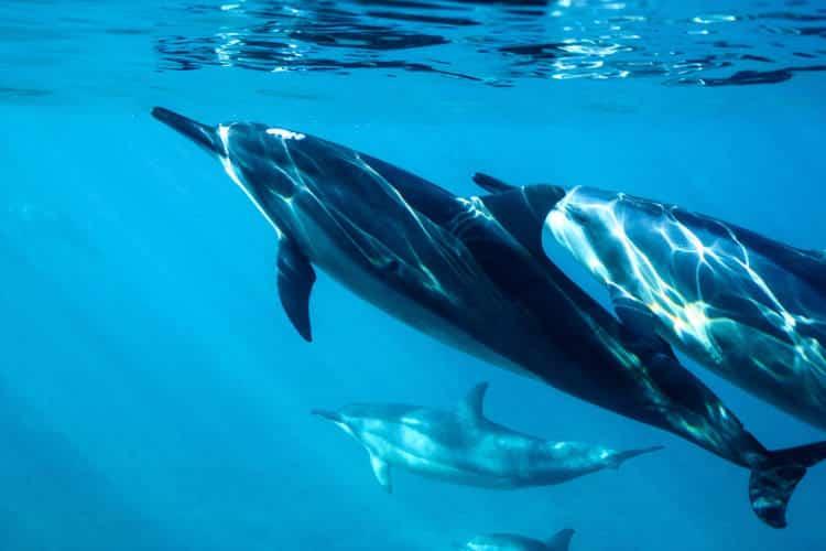 Έρευνα: Τα δελφίνια έχουν παρόμοια χαρακτηριστικά προσωπικότητας με τους ανθρώπους