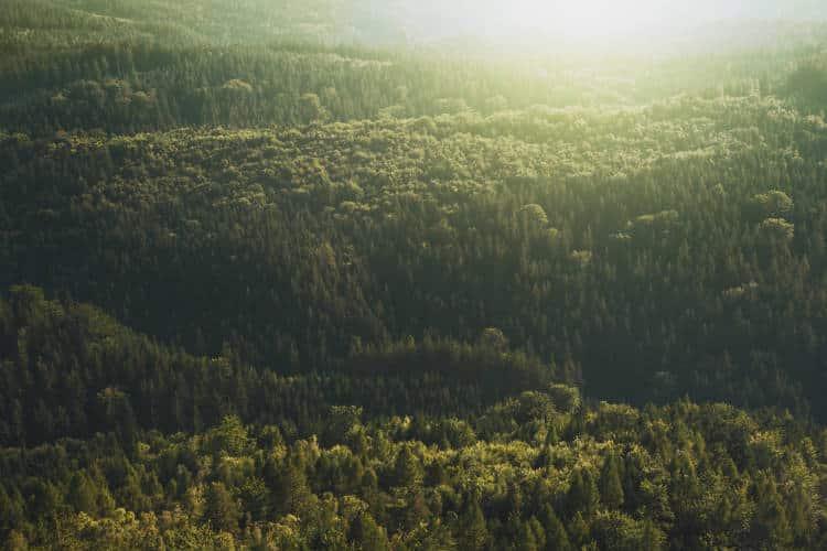 Ερευνητές άπλωσαν χρησιμοποιημένους κόκκους καφέ σε αποψιλωμένη γη και δημιουργήθηκε δάσος