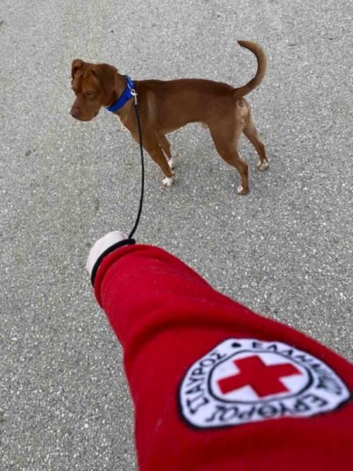 Εθελοντές του Ελληνικού Ερυθρού Σταυρού βγάζουν βόλτα τους σκύλους όσων δεν μπορούν